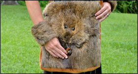 Nutria Fur Fashion Line